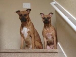 Tyson & Lola